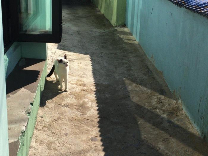 甘川洞文化村の猫